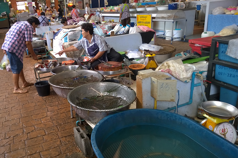 authentic-market-Thailand-fish